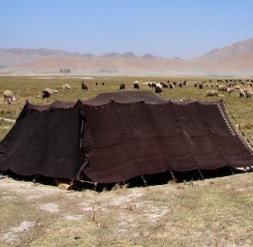 Tenda, campo, ovelhas